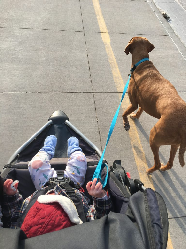 Baby walking the dog